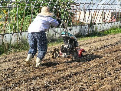 耕耘機を使う母
