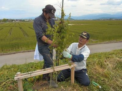 植栽の補修