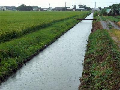 増水した寺川