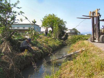 9水路溝畔の立木撤去