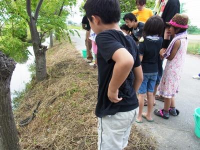 蛇を見る子どもたち