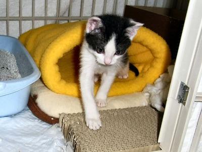 猫のベッド