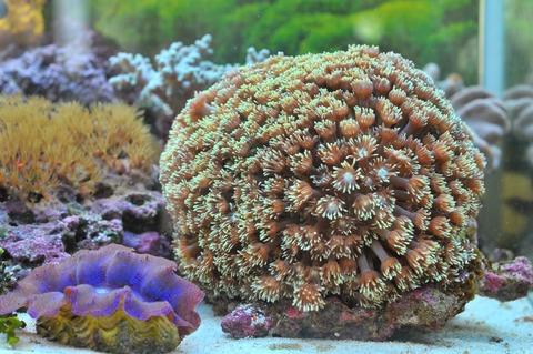 ハナガササンゴとトゲトサカ