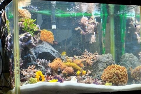 その後の水族館