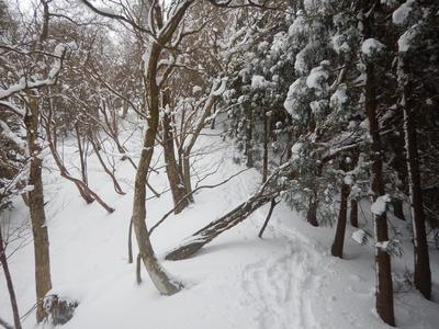 寺山峠への尾根