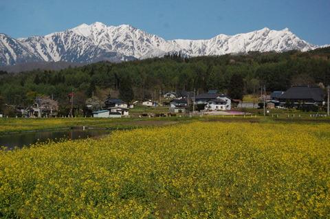 大町市美麻新行の菜の花、権現山から青木湖。 : 長野県安曇野 ...
