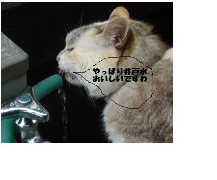 チー井戸水③