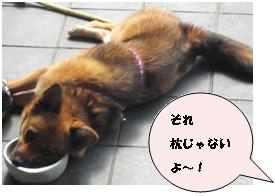 kuri 枕じゃないよ