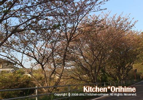 葉桜の様子