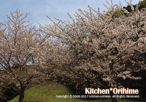 中央病院の上の桜①
