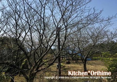 笠木山-展望台と桜の木