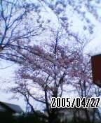 050427_1730~01.jpg