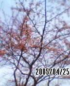 050425_0922~01.jpg