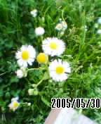 050530_1544~01.jpg