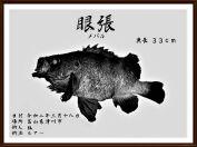 デジタル魚拓メバル狐版