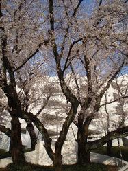 桜台ビレジ