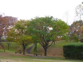 寝屋川公園 紅葉3