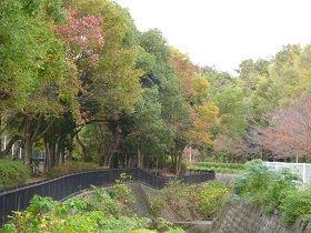 寝屋川公園 紅葉2