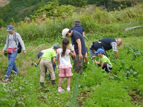 2017 静岡キャンプ3 野菜とり