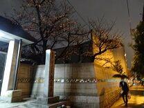 應典院 夜桜