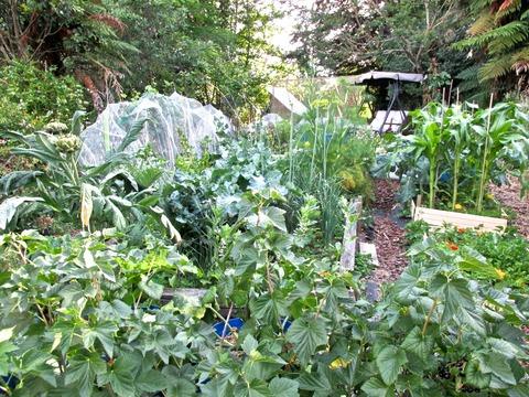 さざんか亭の菜園