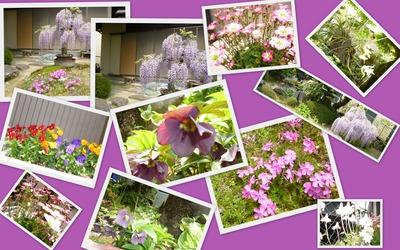 2013-04-12会長の自慢のお庭