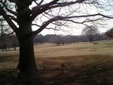 光が丘公園。