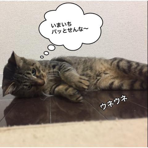 IMG_5037[1]