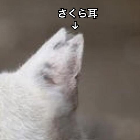 IMG_5585[1]