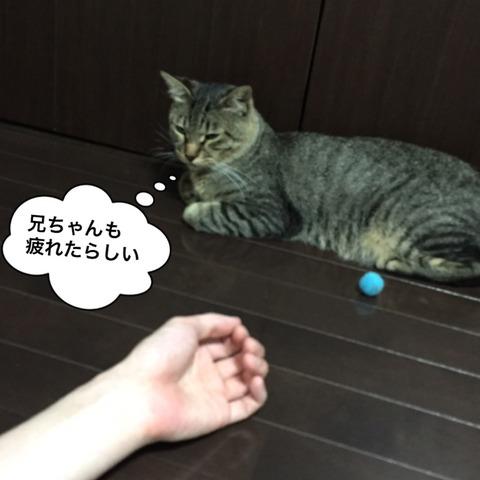 IMG_4342[1]