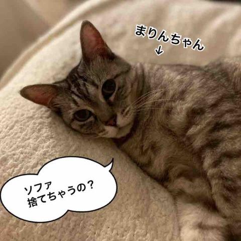 IMG_2392