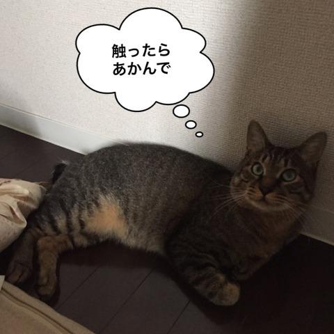 IMG_5971[1]