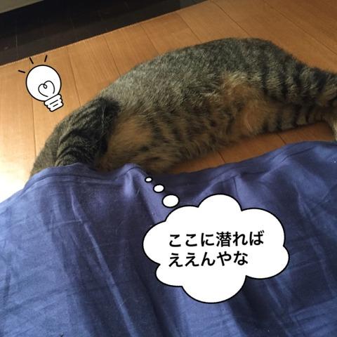 IMG_6799[1]