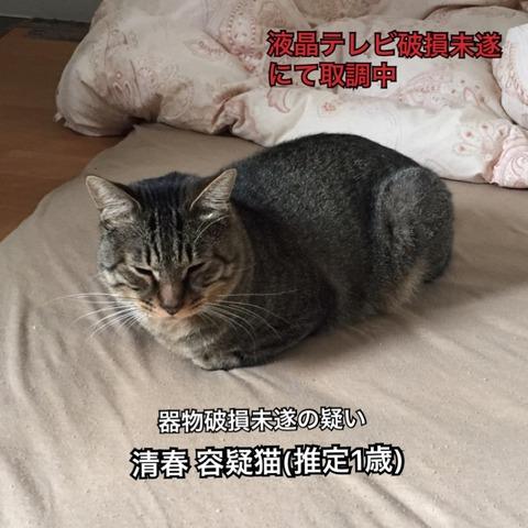 IMG_6245[1]