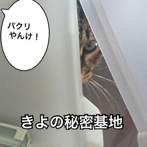IMG_4447[1]