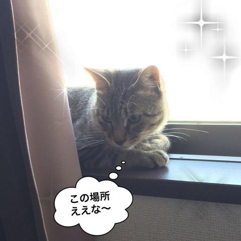 IMG_3980[1]