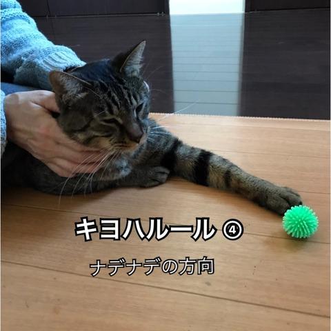 IMG_7074[1]
