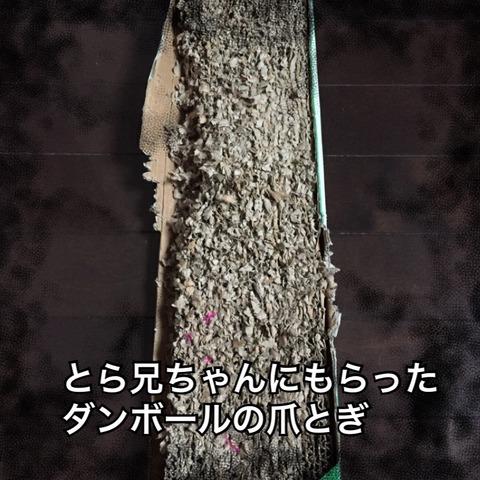 IMG_4602[1]
