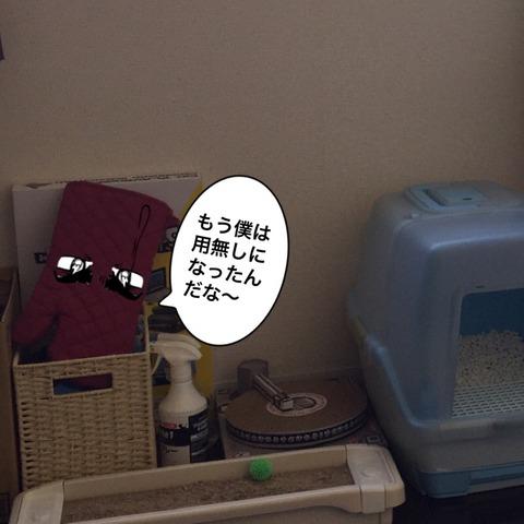 IMG_6590[1]