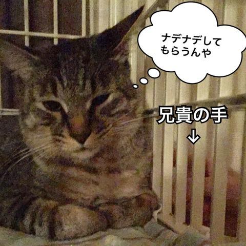IMG_4707[1]