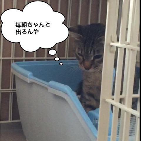IMG_3824[1]