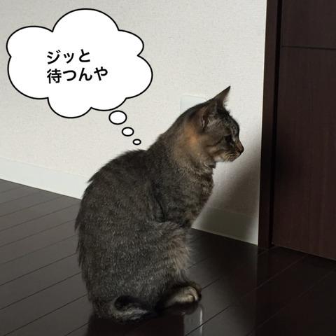 IMG_4278[1]