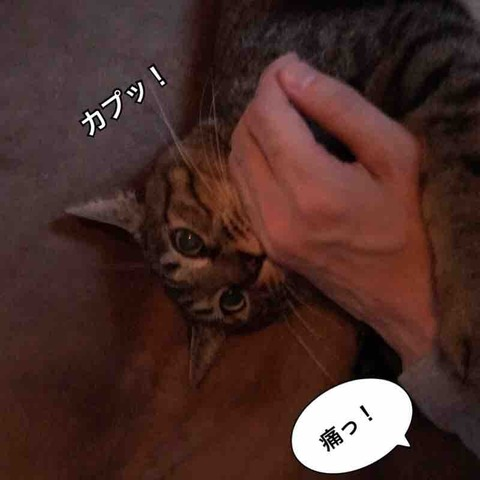 IMG_9988
