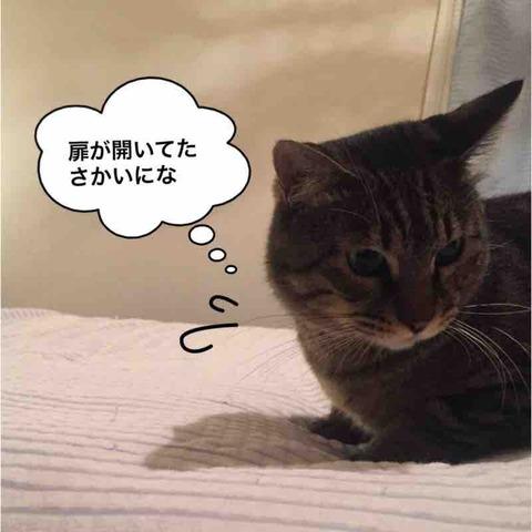 IMG_8160
