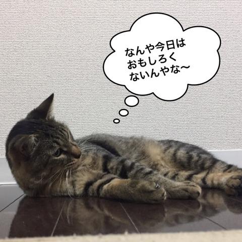 IMG_5040[1]