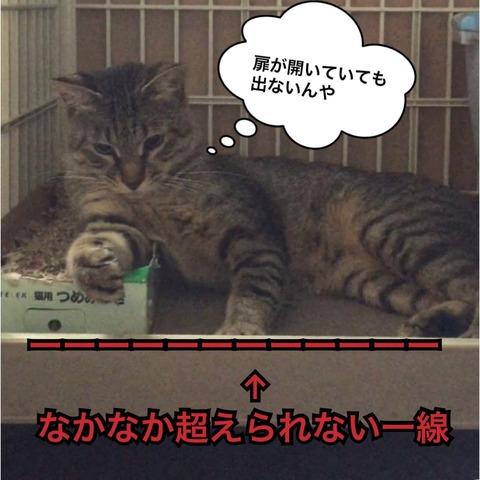 IMG_3681[1]