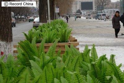 中国式の『緑化』 これ意味ないじゃん…