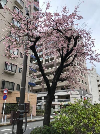 18/03/10スターバックスコーヒーCIAL桜木町店01