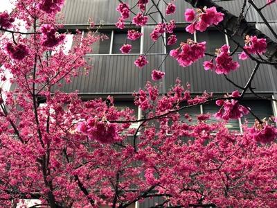18/03/07ラーメン二郎ひばりヶ丘駅前店 02