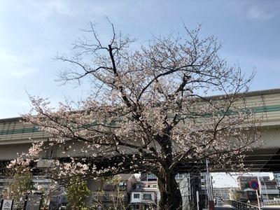19/03/27とんぱた亭新子安店 22